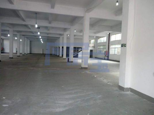 松江区九新公路厂房出租